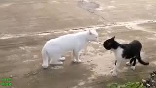 Funny cats 2018