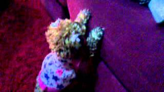 Poodle Cafe Enojada