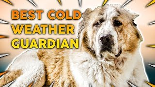 Top 10 Guard Dogs For COLD CLIMATES!