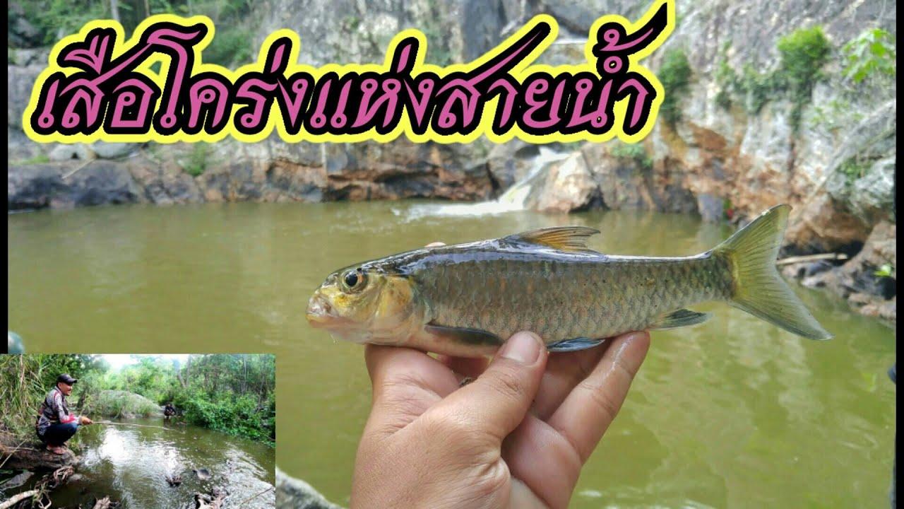 เอาชีวิตรอด เที่ยวป่า กินข้าวป่า หาตกปลาพลวงน้ำตก ในป่าลึก | น้าท๊อป Story |