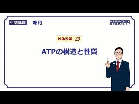 【生物基礎】 細胞23 ATPの構造と性質 (14分)