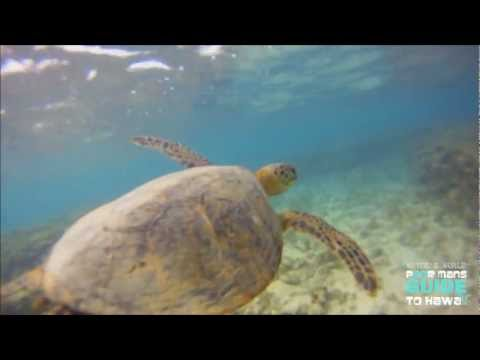 "THE HAWAIIAN GREEN SEA TURTLE ( THE HONU ) HD ""Waydes World Hawaii"""
