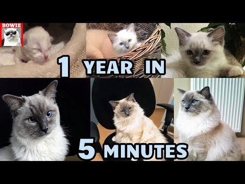 "Kitten to Cat ""Time Lapse"" 1 Year in 5 Minutes."