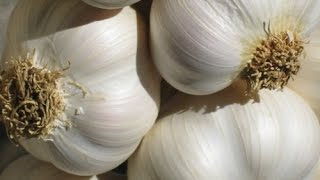 GARLIC FARMING IN KENYA EXPLAINED