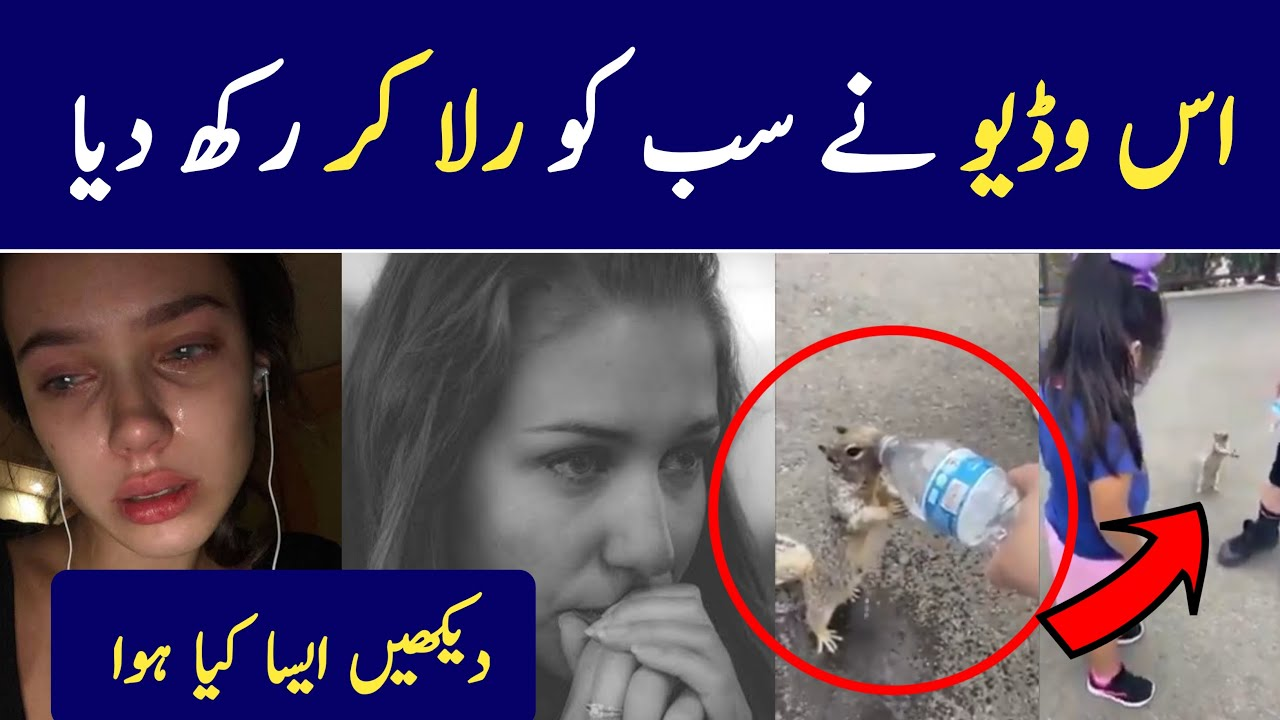 Viral Video Of a Squirrel | ایک گلہری کی حیران کن وڈیو | Emotional Reader