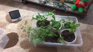 Комнатные цветы/растения. Папоротники. Обзор цветов на кухне. По просьбе подписчиков.