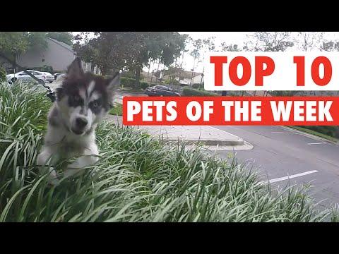 Best Pets of the Week || Nov 20 2015
