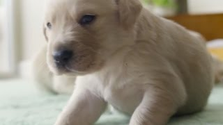 Secret Life of Dogs: Stories That Will Blow You Away - BBC Earth Unplugged