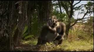 Prehistoric Predators of the Past - Episode 1: What killed the Mega Beasts [Full Documentary]