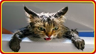 Веселые Кошки 2015! Смешное Видео с Кошками! Funny Cats Video Compilation 2015 /(Веселые Кошки 2015! Смешное Видео с Кошками! Funny Cats Video Compilation 2015 / http://youtu.be/CaX2MI8dQnU ..., 2015-09-08T14:37:02.000Z)