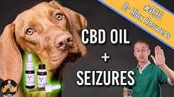 CBD Oil and Seizures in Dogs (the best treatment?) - Dog Health Vet Advice