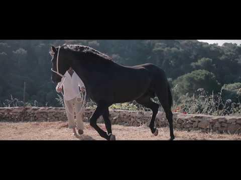 Video de conscienciació: Sant Joan 2017 de Benjamín Riquelme i Sergio Bernhardt