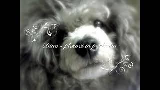 Poodle Dancing - Dogs Singing Christmas Song