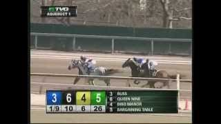 Bliss - 2013 Aqueduct Maiden Claiming Race - First Place Finish