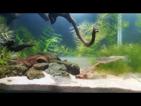 Биотопный аквариум р. Зеленая Украина