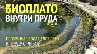 БИОПЛАТО ВНУТРИ ПРУДА.  Чистая и прозрачная вода в пруду с рыбой без фильтра с помощью биоплато!