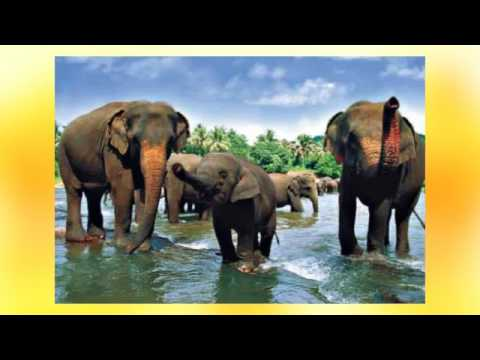 Best Travel places and Top 20 hotels in Sri Lanka