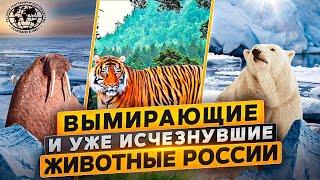 Вымирающие и уже исчезнувшие животные России  Русское географическое общество