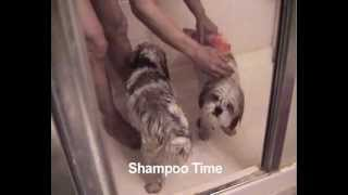 Easiest Way To Bath Your Dog