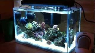 """5 Gallon Nano Reef """"rimless"""""""