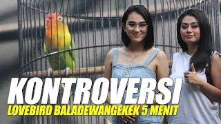 Gambar cover KONTROVERSI KONSLET!!! Aksi Ngekek Love Bird BALADEWA 5 Menit Di Piala MBS Tangerang
