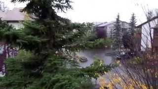 #409 США Аляска Анкоридж Испортилась красная икра Чем лечить ссадины на лице