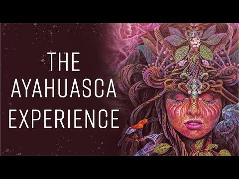 The Ayahuasca Experience