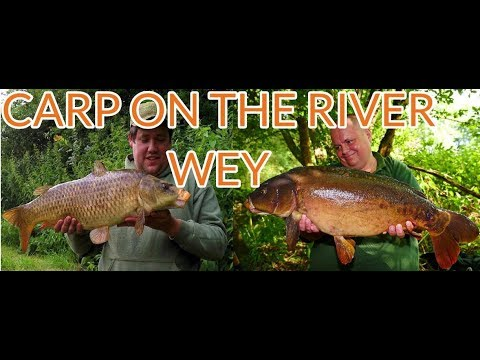 River Fishing - Carp On The River Wey (Video 110)