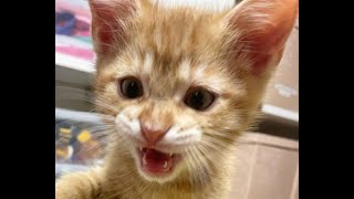 FUNNIEST CAT VIDEOS 😸 2021 - Try Not To Laugh Or Grin Challenge   International Cat