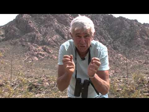 Mojave Desert Plants