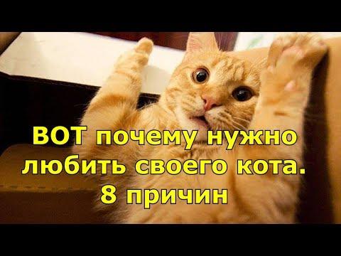 ВОТ почему нужно любить своего кота. 8 причин.