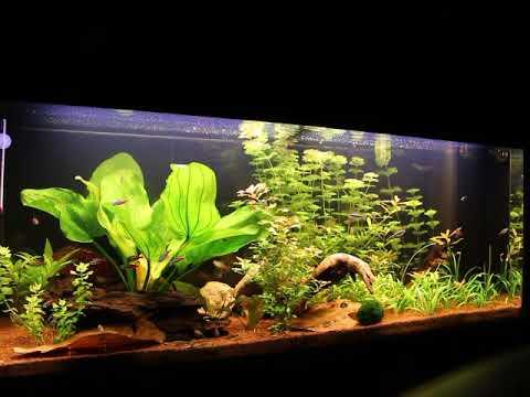 Aquarium 240l Youtube