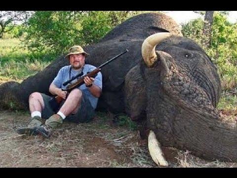 Hunting elephants   Hunting,Chasse