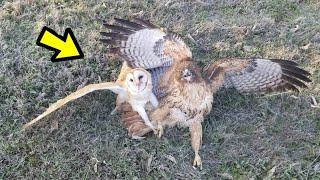 10 batallas épicas de animales Captados en CÁMARA | E.p 17 | Animales Asombrosos