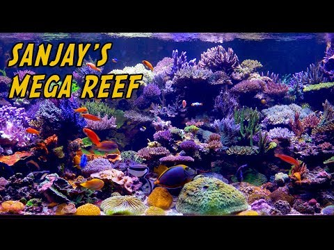 Sanjay 500 Gallon Mega Reef