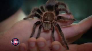 Черная вдова: самый опасный паук Украины - СТОП 5, 19.02.2017