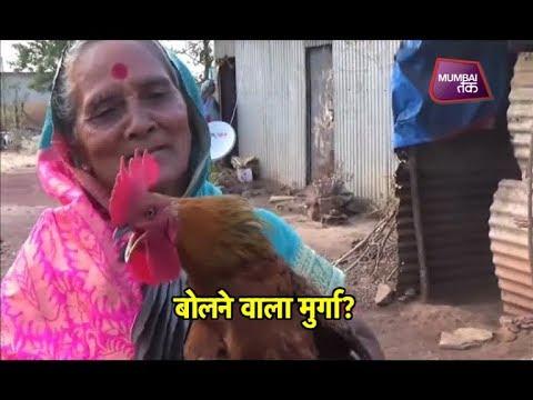 महाराष्ट्र के सांगली में बोलने वाला मुर्गा? | Mumbai Tak
