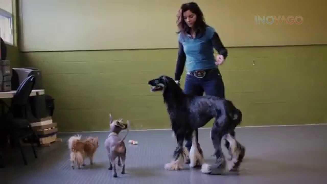 Éducateur canin a domicile Québec, Montréal, Sherbrooke - Dresseur chien  Inovago