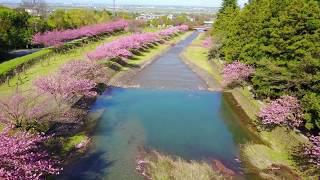 岐阜県 羽根谷だんだん公園(2017/4/18)