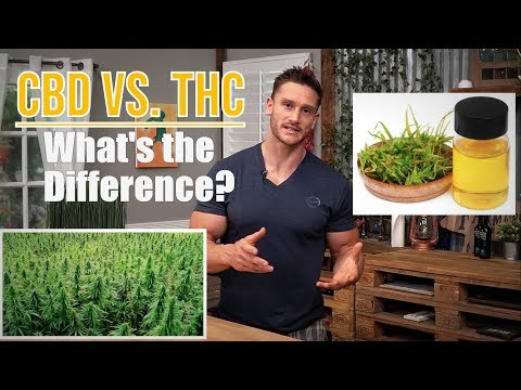 Are CBD & THC the Same? | Wanae Life | Learn the Difference