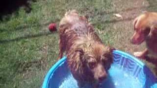 Cookie--what A Water Baby!