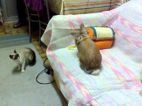 знакомство кошки с новорожденным