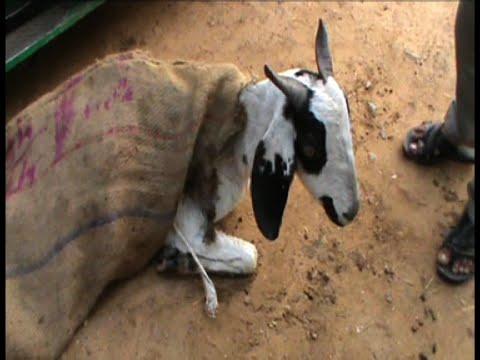 हैवानियत की हदें पार, 'दरिंदे' ने बकरी के साथ किया दुष्कर्म