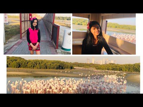 Lagoon & Flamingo hide Ras al Khor