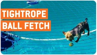 Dog Fetches Ball In Pool | Canine Tightrope Walk