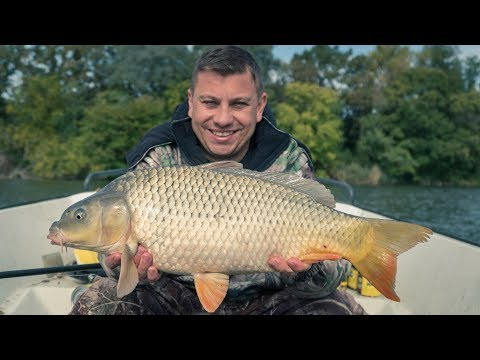 Carp Fishing on the Backwater of the River Danube