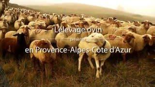 L'élevage ovin en Provence-Alpes-Côte d'Azur