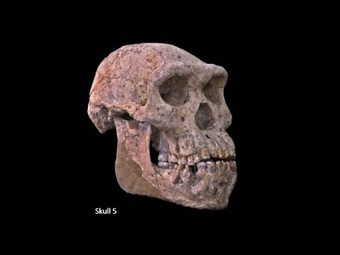 Origins of Genus Homo–Australopiths and Early Homo; Variation of Early Homo; Speciation of Homo