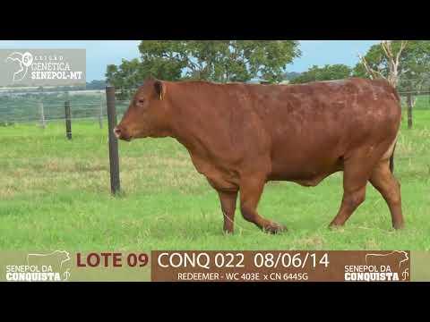 LOTE 09 CONQ 22