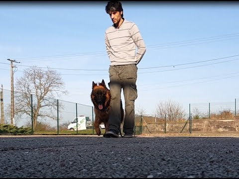 dressage chien 02